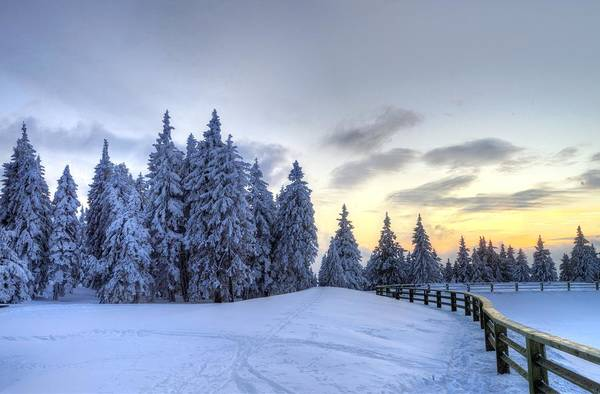 Photograph - Winter  by Ivan Slosar