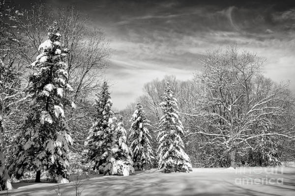 Photograph - Winter Landscape by Elena Elisseeva