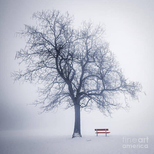 Park Bench Photograph - Winter Tree In Fog by Elena Elisseeva