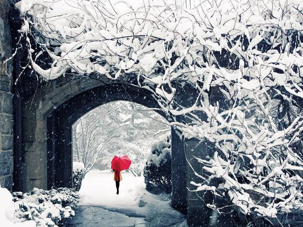 Wall Art - Photograph - Winter's Lace by Jessica Jenney