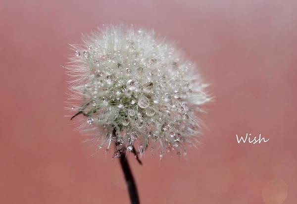 Saying Photograph - Wish by Krissy Katsimbras