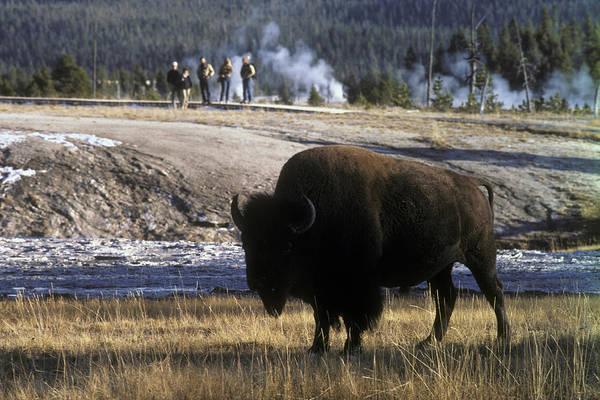Wall Art - Photograph - Yellowstone National Park by Scott Warren