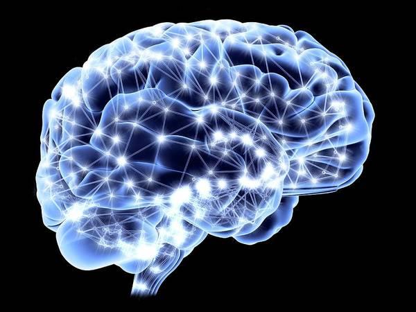 Neurobiology Photograph - Brain by Pasieka