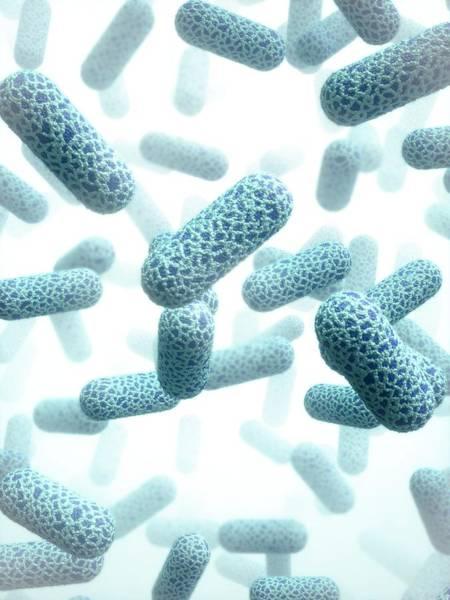 Bacteria Wall Art - Photograph - E. Coli Bacteria by Maurizio De Angelis