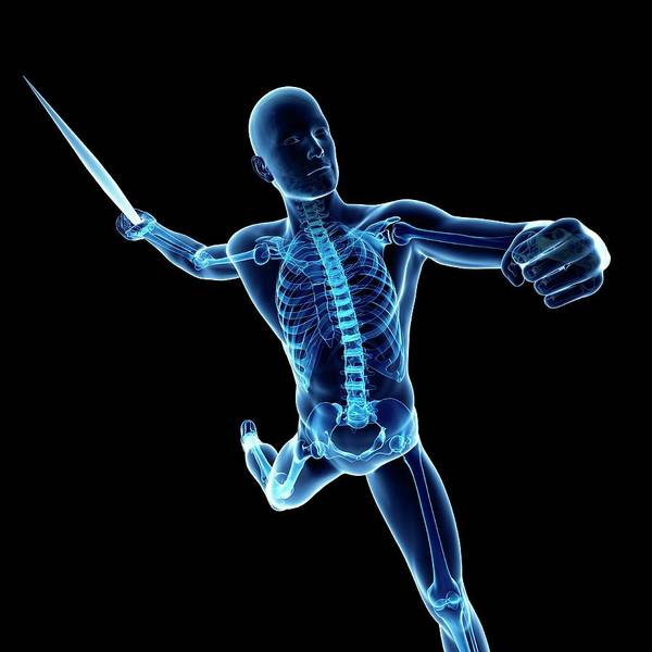 Javelin Photograph - Male Skeleton by Sciepro/science Photo Library