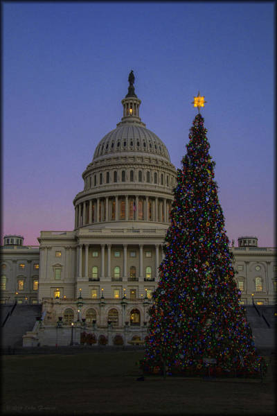Photograph - 2013 Capitol Tree by Erika Fawcett