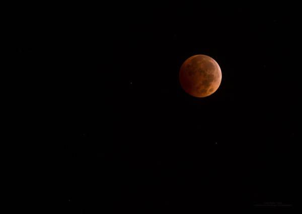 Photograph - 2014 Long Beach Blood Moon By Denise Dube by Denise Dube