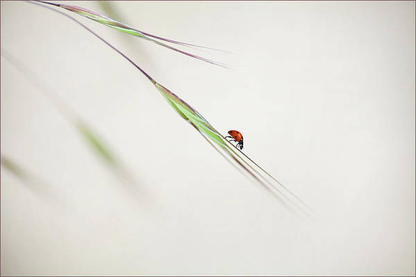 Fauna Wall Art - Photograph - ... by Anna Cseresnjes