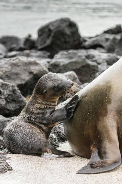 Wall Art - Photograph - Ecuador, Galapagos National Park by Jaynes Gallery