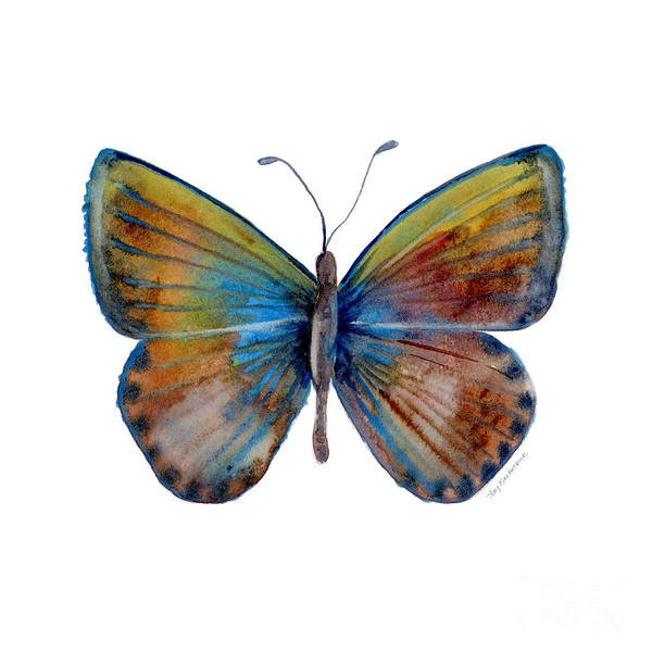 Painting - 22 Clue Butterfly by Amy Kirkpatrick