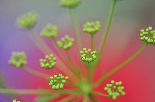Herbs Photograph - Usa, Oregon, Portland by Jaynes Gallery