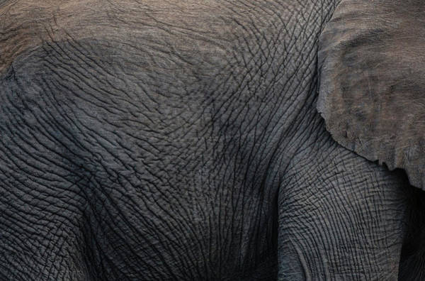 African Elephant Photograph - Africa, Namibia, Etosha National Park by Jaynes Gallery