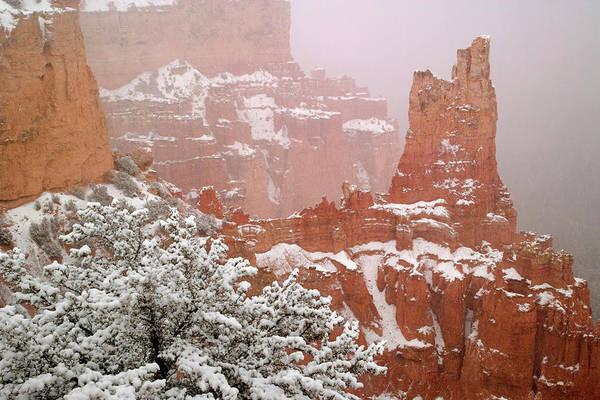 Paria Canyon Photograph - Usa, Utah, Bryce Canyon National Park by Jaynes Gallery