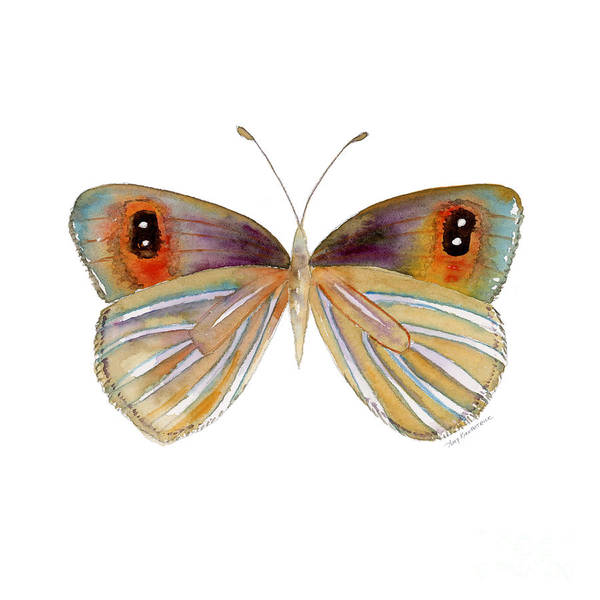 Painting - 24 Argyrophenga Butterfly by Amy Kirkpatrick