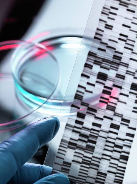 Autoradiogram Photograph - Genetic Research by Tek Image