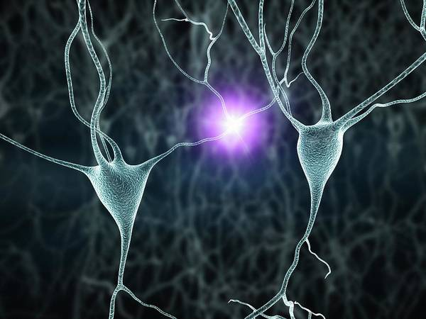 Wall Art - Photograph - Nerve Cells by Alfred Pasieka/science Photo Library