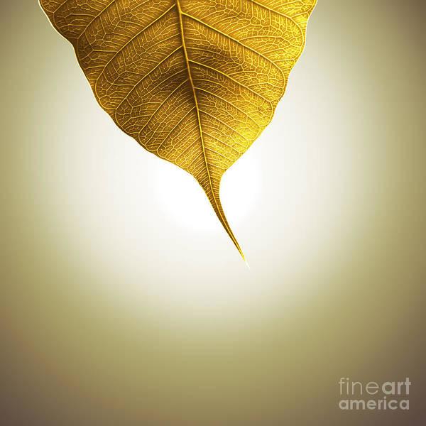 Golden Circle Photograph - Pho Or Bodhi by Atiketta Sangasaeng