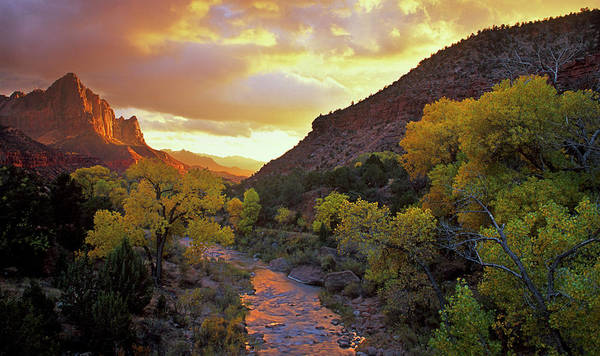 Sunflower Seeds Photograph - Usa, Utah, Zion National Park by Jaynes Gallery