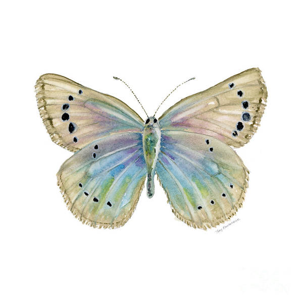 Wall Art - Painting - 25 Alexis Butterfly by Amy Kirkpatrick