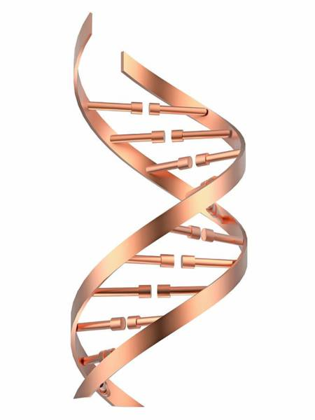 Wall Art - Photograph - Dna Strand by Alfred Pasieka/science Photo Library