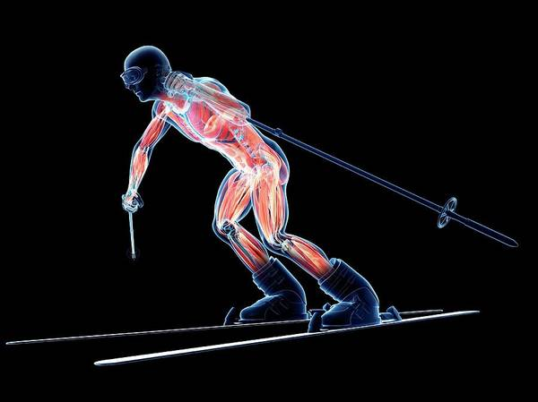 Wall Art - Photograph - Male Musculature by Sciepro/science Photo Library