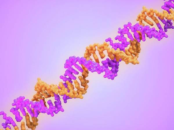 Genetic Information Wall Art - Photograph - Dna Molecule by Maurizio De Angelis