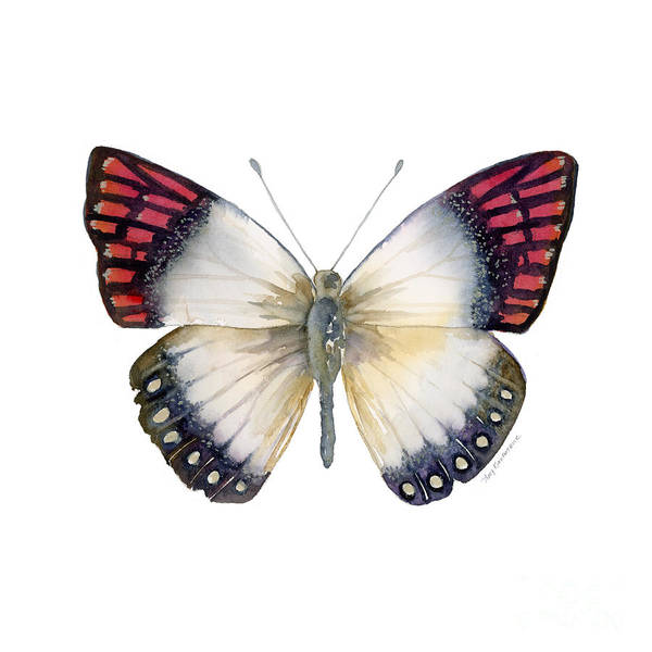 Painting - 27 Magenta Tip Butterfly by Amy Kirkpatrick