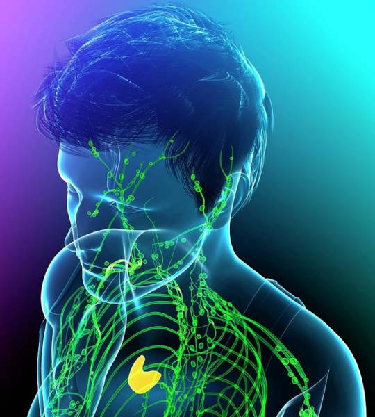 Wall Art - Photograph - Male Lymphatic System by Pixologicstudio/science Photo Library
