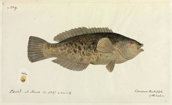 Wall Art - Photograph - Fish by Natural History Museum, London/science Photo Library