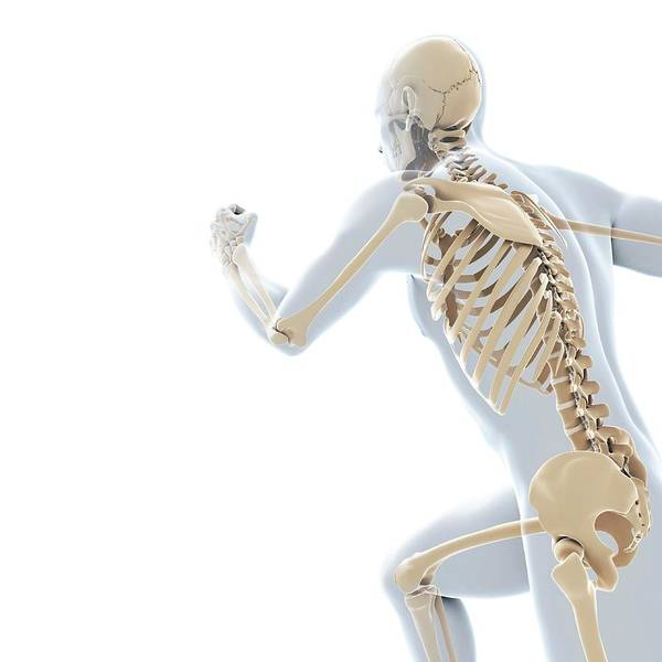 Blade Runner Photograph - Running Skeleton by Sciepro/science Photo Library