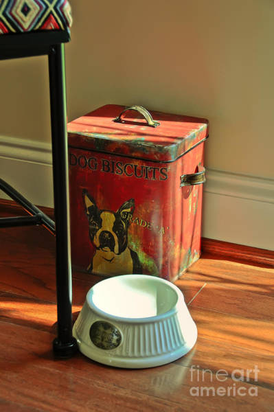 Dog Biscuit Photograph - Accidental Still Life by Lois Bryan