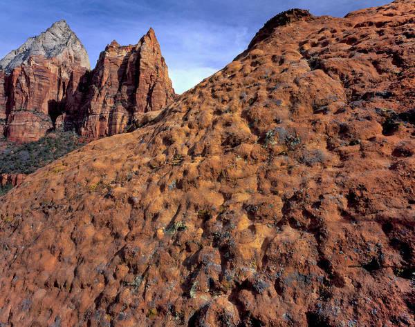 Orange Lichen Photograph - Zion National Park, Utah by Scott T. Smith