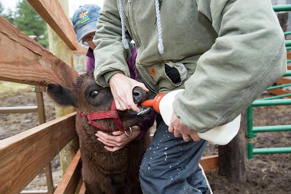 Milk Farm Photograph - Abbey Of St. Walpurga Cattle Ranch by Jim West