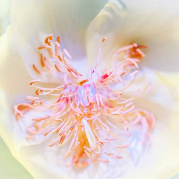 Photograph - Abstract Flower by U Schade