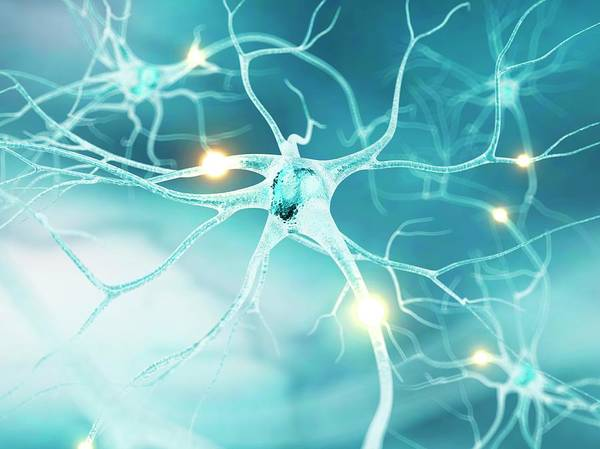 Wall Art - Photograph - Active Nerve Cells by Sciepro/science Photo Library