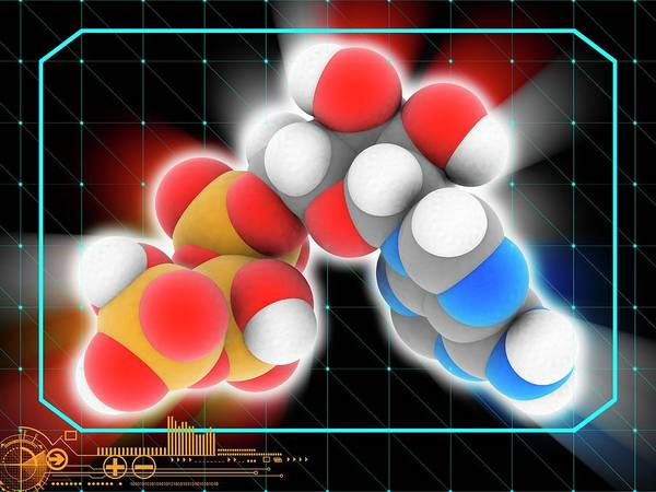 Adenosine Triphosphate Wall Art - Photograph - Adenosine Triphosphate Molecule by Laguna Design/science Photo Library