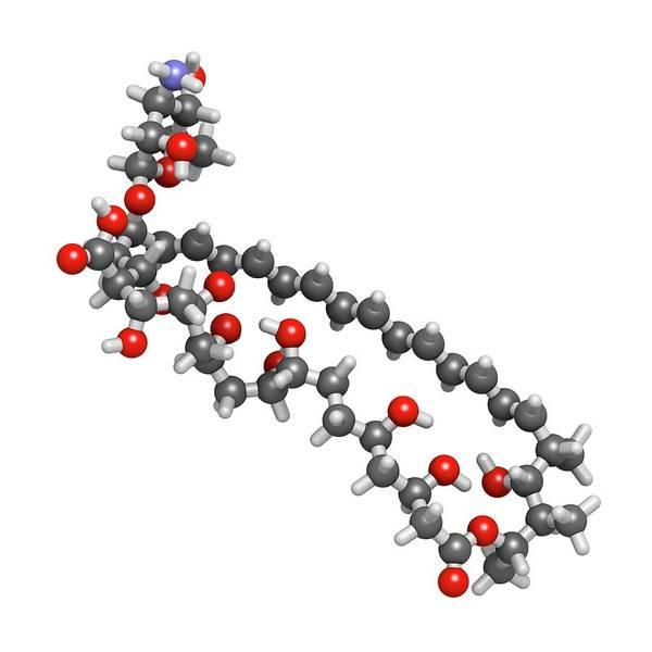 Infection Wall Art - Photograph - Amphotericin B Antifungal Drug Molecule by Molekuul