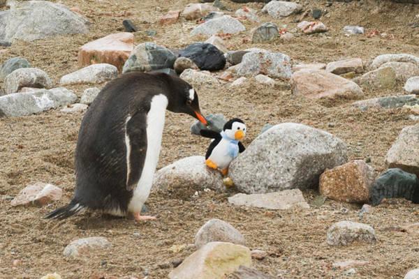 Stuffed Animal Photograph - Antarctica, Neko Harbor by Jaynes Gallery
