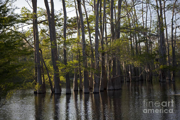 Photograph - Atchafalaya River Basin by Jim West