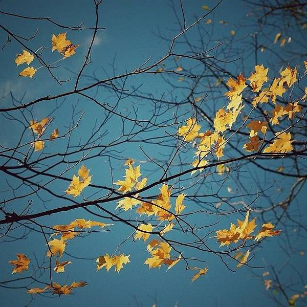 Iphoneography Wall Art - Photograph - Autumn Leaves - Nc by Joel Lopez