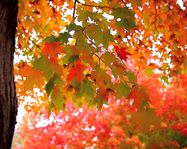 Photograph - Autumn Leaves by Rona Black