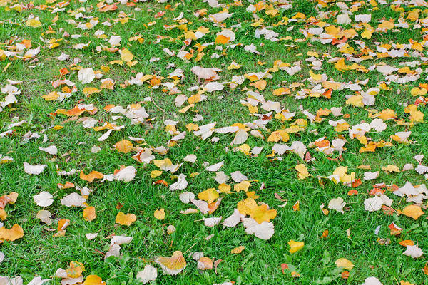Annual Photograph - Autumn Leaves by Tom Gowanlock