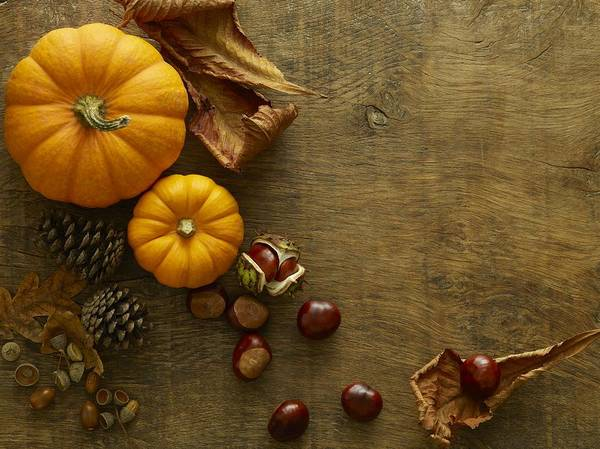 Autumn Still Life Art Print by Science Photo Library