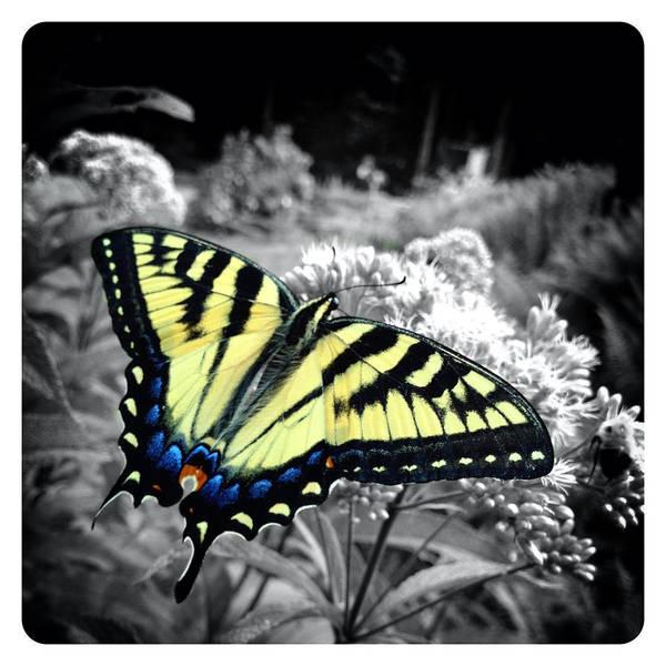 Catskills Photograph - Beautiful Butterfly by Natasha Marco