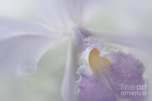 Photograph - Beauty In A Whisper by Sharon Mau