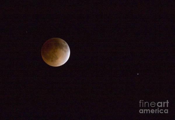 Photograph - Blood Moon by Steve Krull