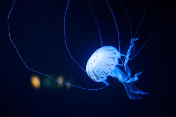 Photograph - Blue by U Schade