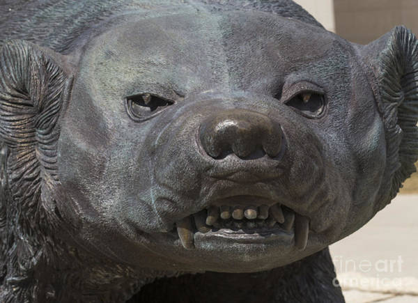 Photograph - Badger Sculpture At Uw Madison by Steven Ralser
