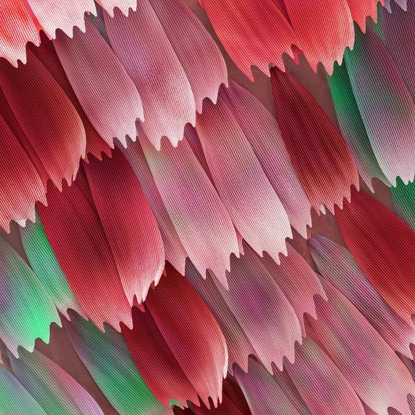 Photograph - Butterfly Wing Scales by Power And Syred