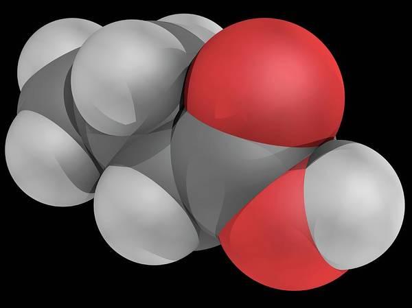 Wall Art - Photograph - Butyric Acid Molecule by Laguna Design/science Photo Library